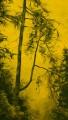 Arbres °1 - 90x160cm -2012 thumbnail