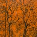 Arbres °5 - 115x115cm -2013 thumbnail