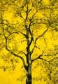 Arbres °8 - 100x150cm -2013 thumbnail