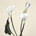 Fleurs °1 - 45x45cm - 2005 thumbnail