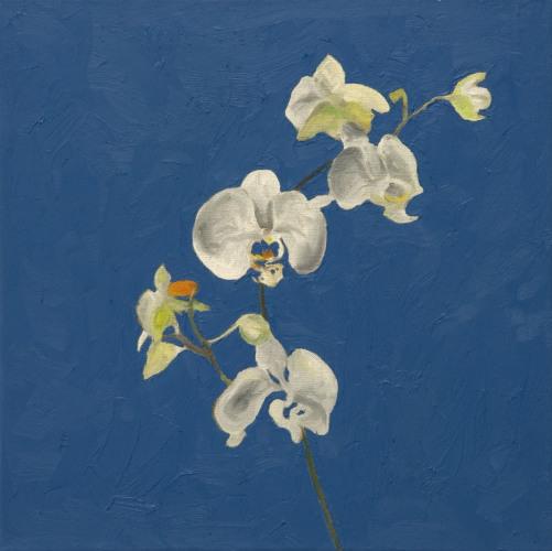 Fleurs °14 - 45x45cm - 2005