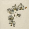 Fleurs °15 - 45x45cm - 2005 thumbnail