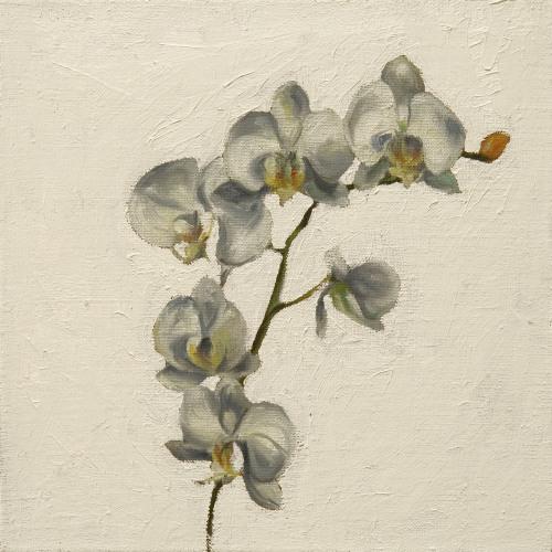 Fleurs °15 - 45x45cm - 2005