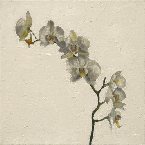 Fleurs °16 - 45x45cm - 2005
