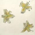 Fleurs °7 - 45x45cm - 2005 thumbnail